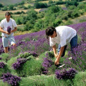 Insediamento giovane in Agricoltura