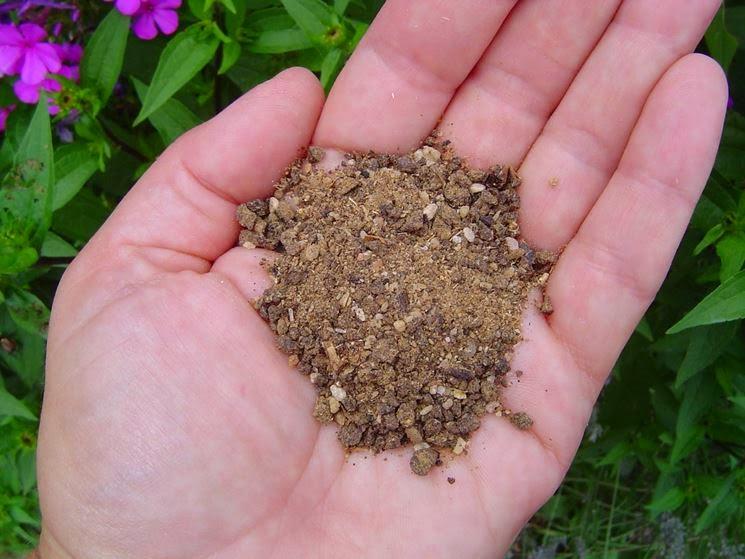 concime-fosforo come ridurre