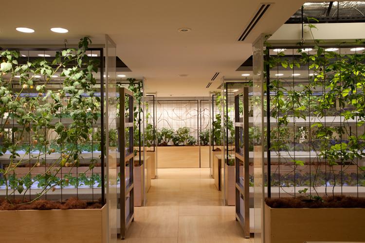 Urban Underground Vertical farm