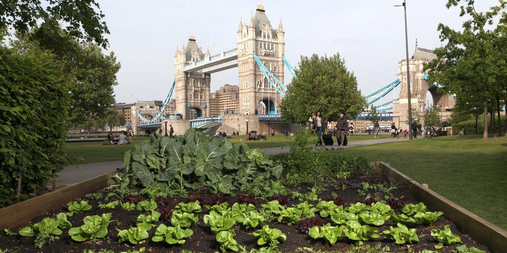 londra-urban-farm
