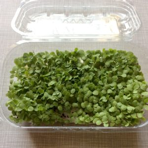 lollo verde microgreens