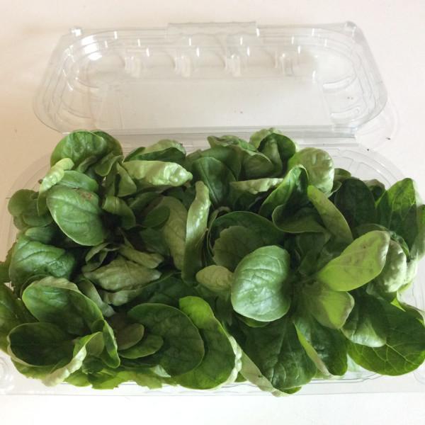 soncino microgreens