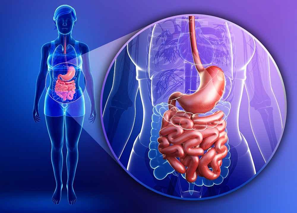 intestino per prevenire malattie